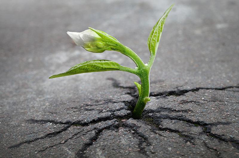 Pflanze durchbricht Asphalt